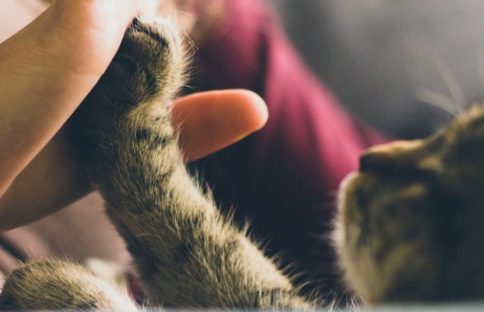 Защо котките ни масажират преди да заспят?