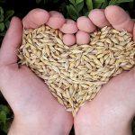 Овесените ядки и техните ползи за здравето