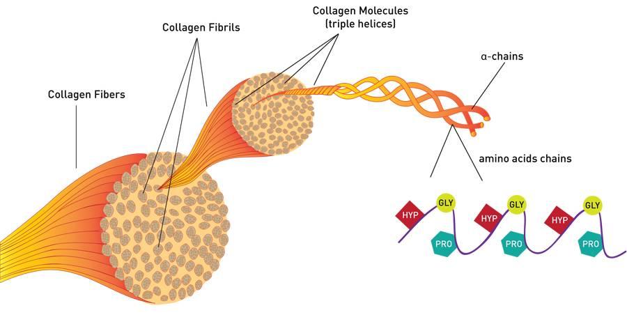 Всичко за ползите от колагена