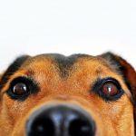 Как кучетата надушват лошите хора?