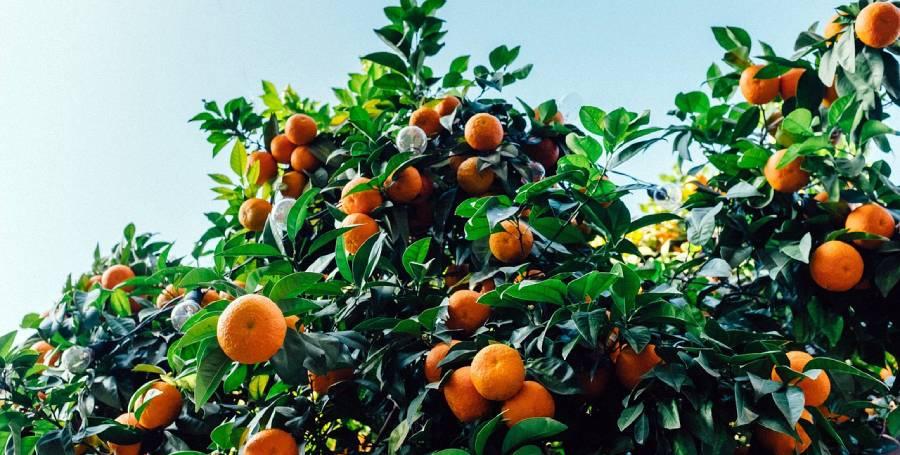 Различни видове витамини, техните ползи, хранителни източници и препоръчителен прием