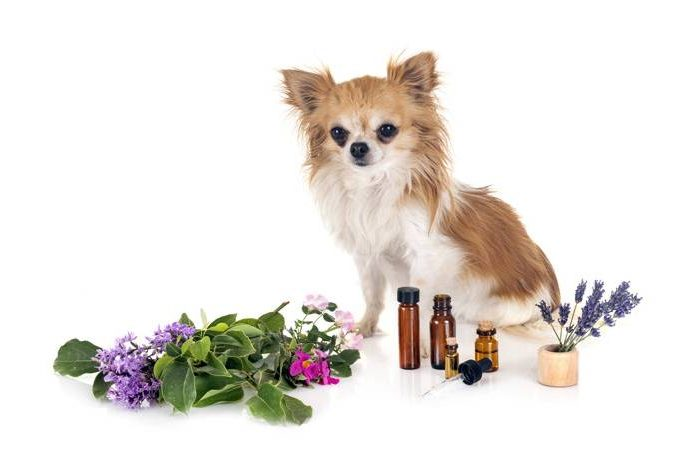 Етерични масла за кучета – безопасни ли са те?